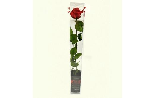 Rosen in der Geschenkverpackung
