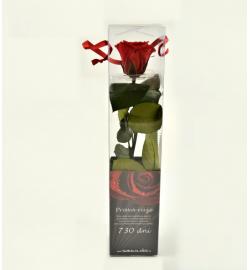 Mini - rosen in der Geschenkverpackung