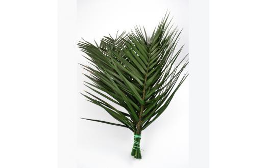Phoenix Palmblättern